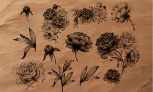 唯美手绘花朵和枝叶PS笔刷