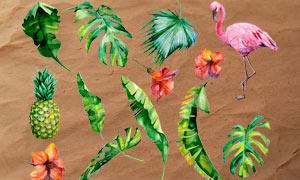 热带植物和绿叶PS笔刷