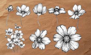 线描风格花朵和花卉PS笔刷