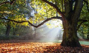 早晨阳光下的一地树叶摄影高清图片