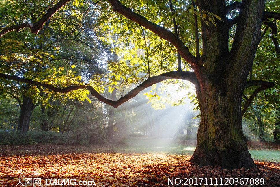 大图首页 高清图片 自然风景 > 素材信息          历经岁月沧桑的一