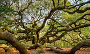 历经岁月沧桑的一棵树摄影高清图片