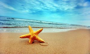 海景与在沙滩上的海星摄影高清图片