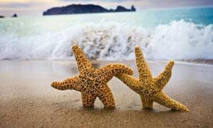 正手拉着手的两只海星摄影高清图片
