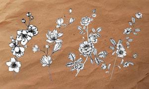 线描花朵和花枝PS笔刷