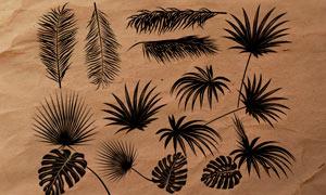 热带植物枝叶PS笔刷