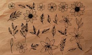 线描花朵和枝叶PS笔刷