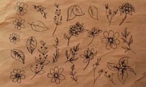 线条花朵和花枝PS笔刷