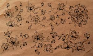 线描花枝和花朵PS笔刷