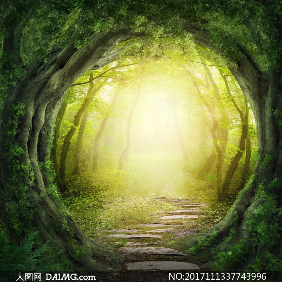通往神秘小树林的小路摄影高清图片