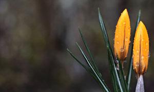 鲜花叶子上挂着水珠的植物高清图片