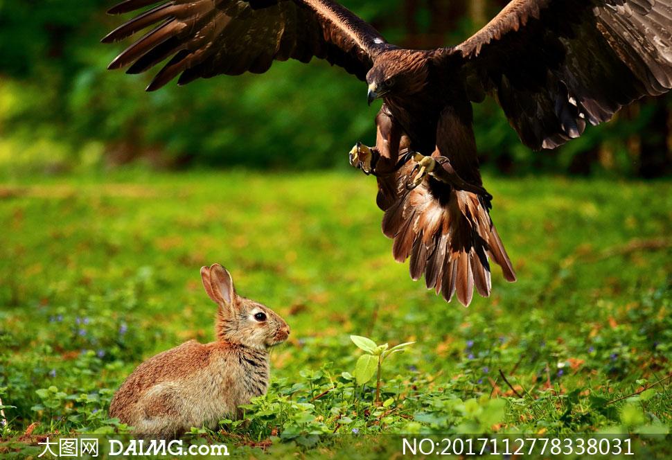 兔子简笔画侧面