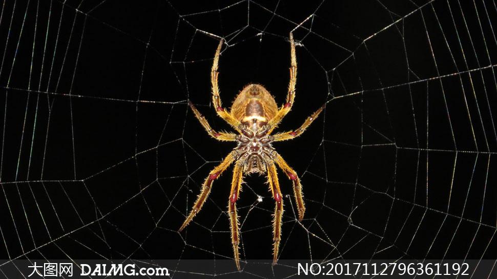 在忙着织网的蜘蛛特写摄影高清图片