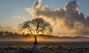 暮霭中的树木风景逆光摄影高清图片