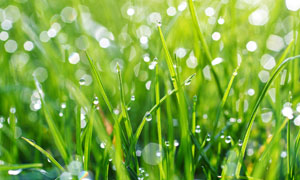 梦幻光斑点缀茂密草丛摄影高清图片