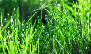 密集植物草丛微距特写摄影高清图片