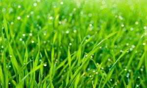 星星点点效果草丛特写摄影高清图片