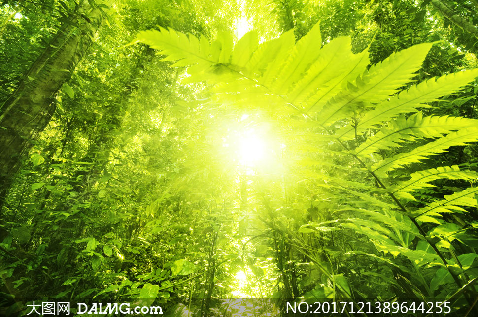 绿叶葱葱树林风景逆光摄影高清图片