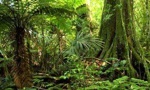 人迹罕至原始森林风光摄影高清图片