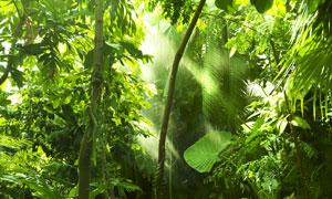 热带地区茂密树林逆光摄影高清图片