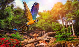 一直翱翔树林中的金刚鹦鹉高清图片