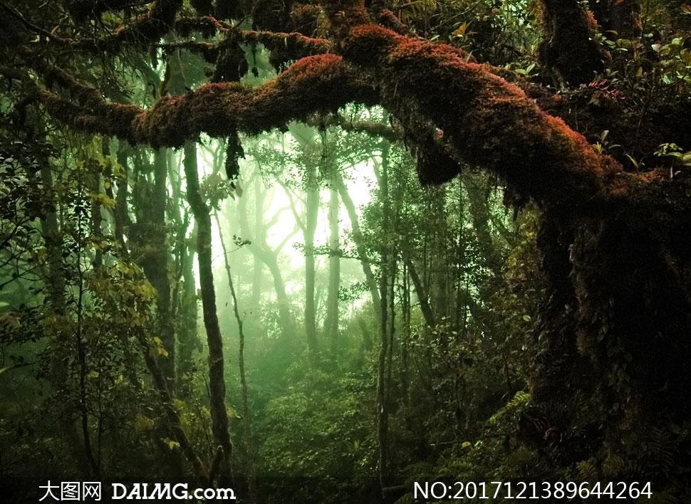 神秘气息原始森林风景摄影高清图片