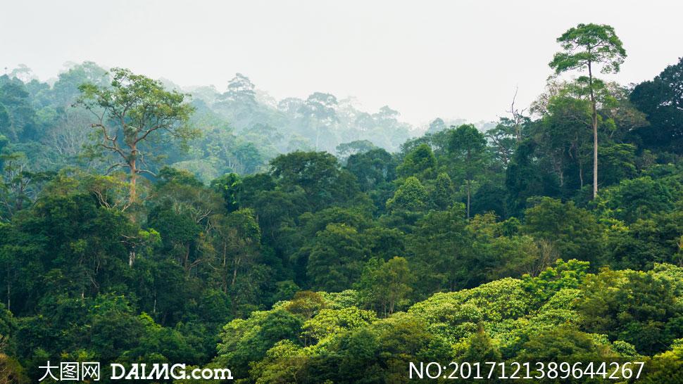 山间茂密树林自然风光摄影高清图片