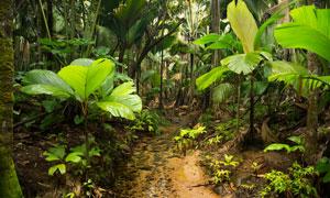 热带雨林中的芭蕉树等摄影高清图片