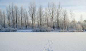 雪后的树林与积雪风光摄影高清图片