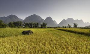 农田庄稼地与远处的山摄影高清图片
