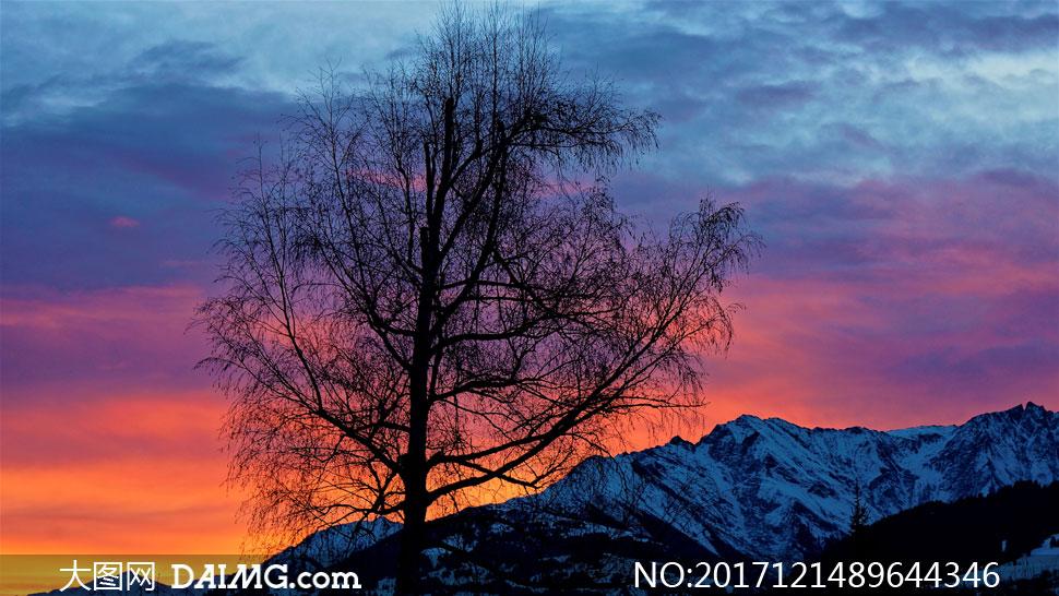 词: 高清图片大图素材摄影自然风景风光天空晚霞霞光夕阳黄昏傍晚大树