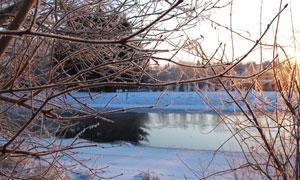 树枝掩映未结冰的河水摄影高清图片