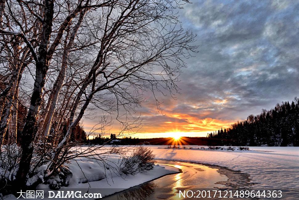 寒冷冬天树木冰雪逆光摄影高清图片