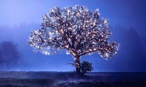 彩灯和星光装饰的圣诞树PS教程素材