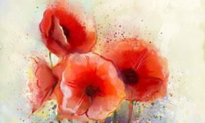在绽放的红色花卉绘画设计高清美高梅