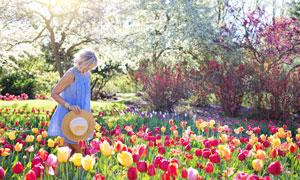 走在郁金香鲜花丛中的美女高清图片