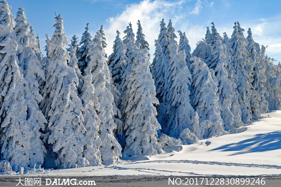 寒冷时节冰雪树林风光摄影高清图片