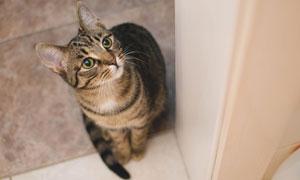 蹲在门口瞪着圆眼睛的小猫高清图片