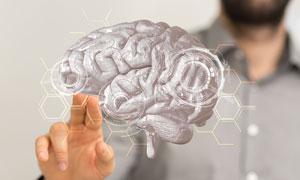 手触摸的大脑模型创意摄影高清图片