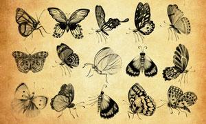 30款高清晰蝴蝶PS笔刷