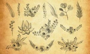 高清晰水彩植物和花卉PS笔刷