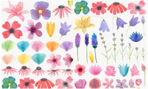 春季水彩花朵装饰PS笔刷