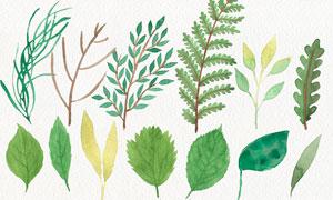 水彩植物和叶子PS笔刷
