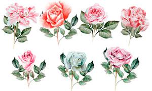 21款高清晰水彩玫瑰花束PS笔刷