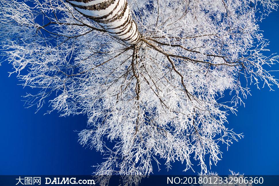 大图首页 高清图片 自然风景 > 素材信息          树枝上的积雪近景