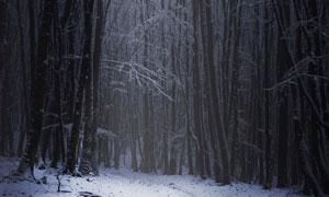 寒冷季节茂密树林雾凇美景高清图片