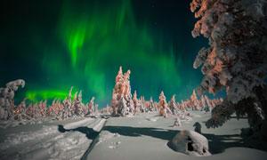 雪后树木景观与瑰丽的极光高清图片