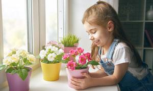 端详着鲜花盆栽的女孩摄影高清图片