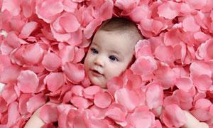 粉红色花瓣中的小宝宝摄影高清图片