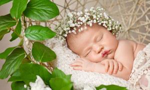 头戴花环在睡觉的宝宝摄影高清图片